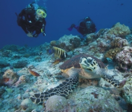 PADI Turtle & Divers - 2 Across