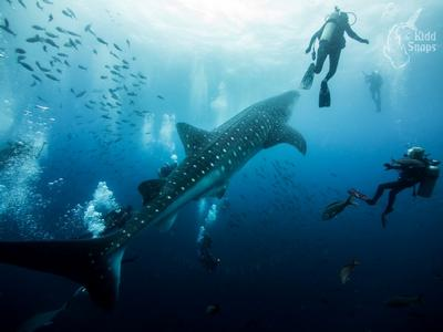 Whale Shark Ampitheatre